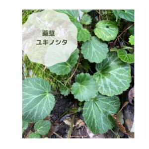 【自然の草花でお菓子を作る♪~ふだんの飲食が病気を未然に防ぎます】