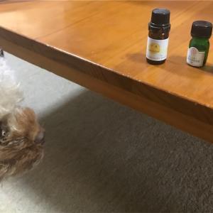 犬とアロマ 〜甘夏は甘夏柑(果物)の香りが好きだった〜