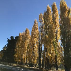 ニュージーランドの秋