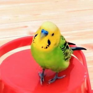 「愛鳥週間」にちなんで〜幸せの青い鳥はすぐそばに…〜