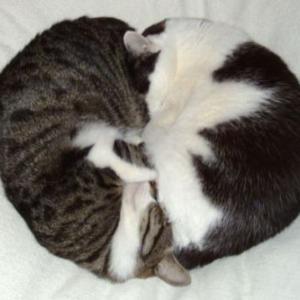 猫柄のバレンタインチョコ  75品  掲載