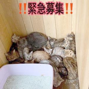 多頭飼育崩壊の猫、総数149匹