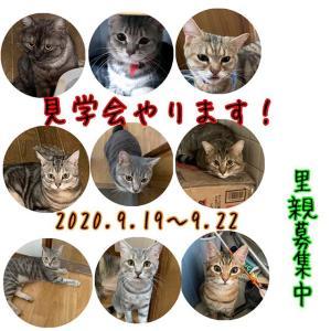多頭飼育崩壊の猫、80匹(里親募集中)