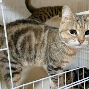 多頭飼育崩壊の猫、69匹(里親募集中)2