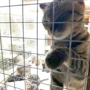 多頭飼育崩壊の猫、66匹(里親募集中)