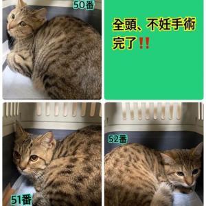 多頭飼育崩壊の猫、64匹(里親募集中)