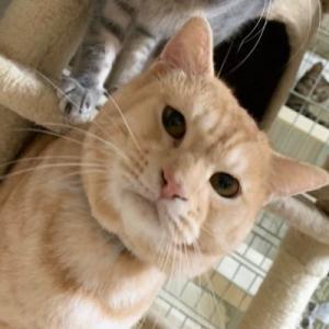 多頭飼育崩壊の猫65匹(クラウドファンディング準備中)