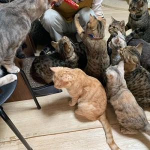 多頭飼育崩壊の猫65匹(クラウドファンディング11/10開始予定)