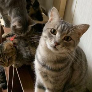 シェルターの住人⑦ (猫丸情報)