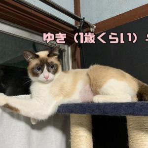 【猫丸情報】 告知②   見学会 9/18~9/20