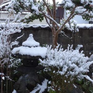 またまた積雪真っ白