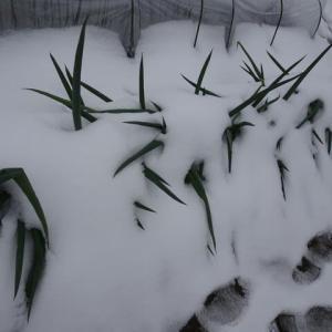 大雪もやっと峠を越えたようで