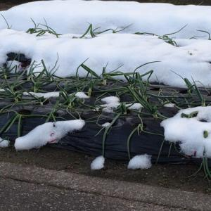 雪がかなり消えたようで