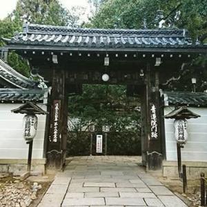 京都 紅葉今が見ごろ 青蓮院門跡