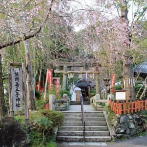 京都 若王子神社・桜花祭 2020年4/5(日)