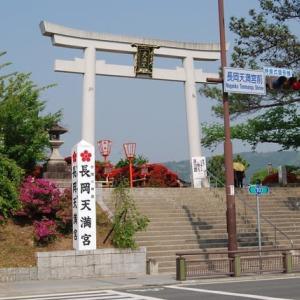 京都桜 京のお花見コース(西京区周辺)