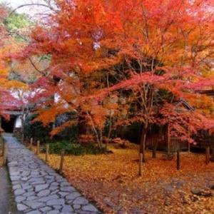 京都 紅葉100シリーズ  みごとな紅葉蓮華寺 NO.74
