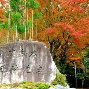 京都 紅葉100シリーズ寺社 阿弥陀寺