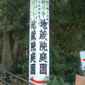 京都ぶらり女の1人旅 地蔵院 緑溢れる竹の寺