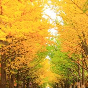 てぶくろが欲しい!?秋の北海道・札幌周辺での気温と服装