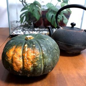 とっても簡単!完熟かぼちゃの見分け方