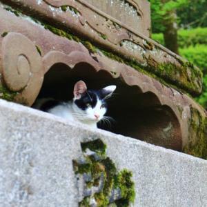 猫神様が大ピンチ!宮城県丸森町の被災で