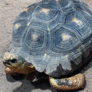 円山動物園ならここがお勧め!超充実の「は虫類・両生類館」【苦手な方、閲覧注意】【観光・札幌・口コミ】