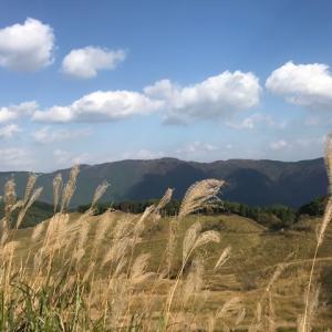 砥峰高原は本当にススキだけ。それでも白銀景色と黄金景色に魅了される!