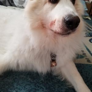 守る犬…間違える女