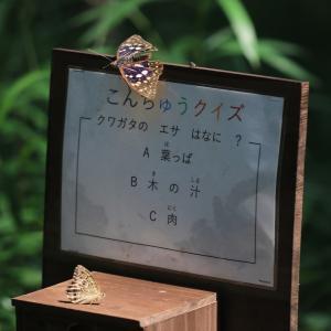 蝶の写真 8月の蝶あれこれ
