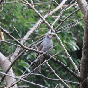 野鳥の写真 東高根森林公園の冬の鳥いろいろ
