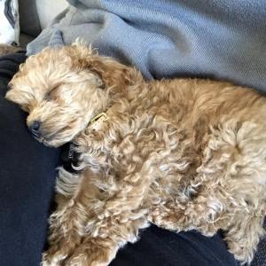 初登場の愛犬プー❤️