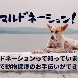 アニマルドネーションで動物保護団体やNPO法人のお手伝い