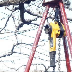 ヒッパラーと吊り下げ三脚で梨の棚補修。