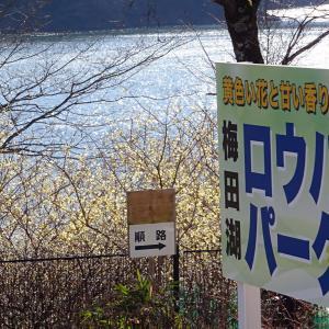 梅田湖ロウバイパーク 2019年