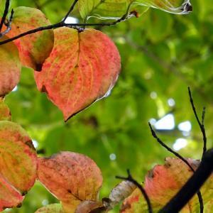アニマル通信~秋の気配