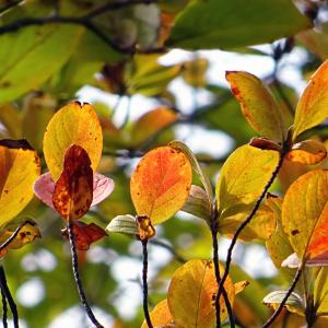 秋の怪奇現象