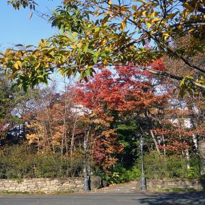 シュマンドールの紅葉