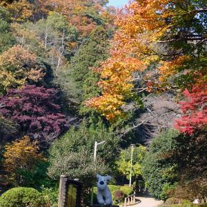 吾妻公園の紅葉 2020年