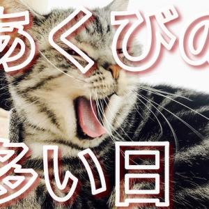 あくび連発??写真を撮られると口が開いちゃう猫?
