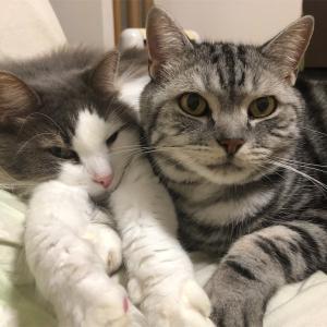 続かない猫ブログに改革を!
