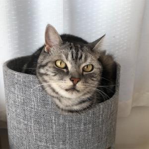 どんな時でも味方になってくれる愛猫兄弟♡