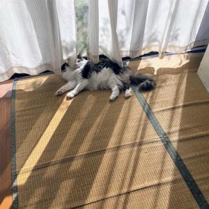 猫日向ぼっこ。秋の日差しは気持ちいい。