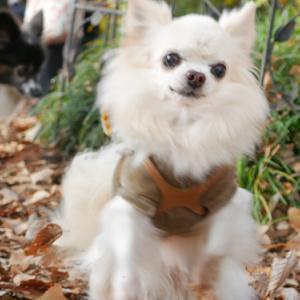 犬の保護団体のオフ会に行って来ました