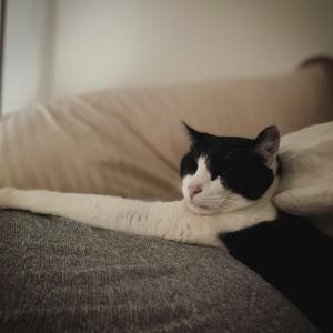 朝起きたら目の前には猫さま