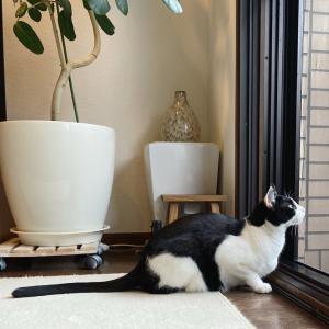 日曜の猫さま