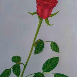 『赤いバラ:薔薇の絵』&『「オレンジとピンク」の薔薇の花の絵』&初盆のお供えのお花