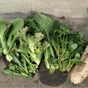 Sおじいちゃんの新鮮野菜