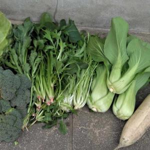 Sおじいちゃんの新鮮なお野菜でいつも健康