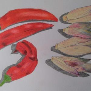 「茗荷:ミョウガ」と「赤いシシトウガラシ🌶」の絵を描きました